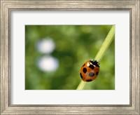 Ladybug on a stem Fine Art Print