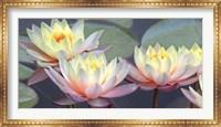 Lotus Panorama Fine Art Print