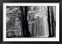 Winter is Coming Fine Art Print