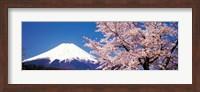Mt Fuji Cherry Blossoms Yamanashi Japan Fine Art Print