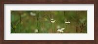 Wildflowers in a field Fine Art Print