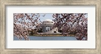 Cherry Blossom trees in the Tidal Basin with the Jefferson Memorial in the background, Washington DC Fine Art Print