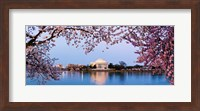 Cherry Blossom tree with a memorial in the background, Jefferson Memorial, Washington DC, USA Fine Art Print