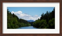 River flowing through a forest, Queets Rainforest, Olympic National Park, Washington State, USA Fine Art Print