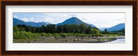 Quinault Rainforest, Olympic National Park, Olympic Peninsula, Washington State Fine Art Print