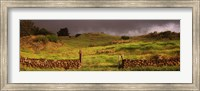 Stone wall in a field, Kula, Maui, Hawaii, USA Fine Art Print