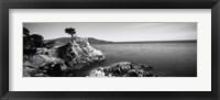 Cypress tree at the coast, The Lone Cypress, 17 mile Drive, Carmel, California (black and white) Fine Art Print