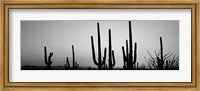 Black and White Silhouette of Saguaro cacti, Saguaro National Park, Arizona Fine Art Print