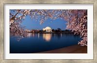 Cherry Blossom Tree with Jefferson Memorial, Washington DC Fine Art Print