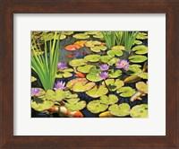 Koi Pond II Fine Art Print