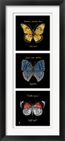 Primary Butterfly Panel II Fine Art Print
