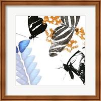 Butterfly Inflorescence II Fine Art Print
