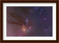 Antares and Scorpius Head area with Rho Ophiuchi nebulosity Fine Art Print