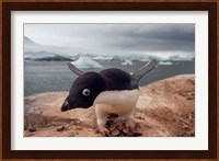 Adelie penguin, Western Antarctic Peninsula Fine Art Print
