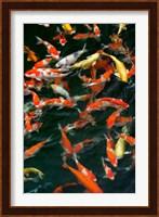 China, Hong Kong, Kowloon, Koi carp in Nan Lian Garden Fine Art Print