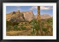 Giant Lobelia, Simen National Park, Northern Ethiopia Fine Art Print