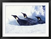 Emperor Penguins in Dive Hole, Antarctica Fine Art Print