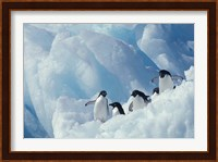 Adelie Penguins, Antarctica Fine Art Print