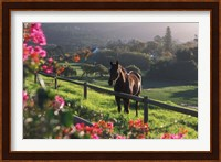 Constantia Winery, Cape Town, South Africa Fine Art Print