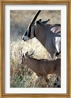 Beisa Oryx and Calf, Kenya Fine Art Print