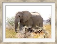 African Elephant and Zebra at Namutoni Resort, Namibia Fine Art Print