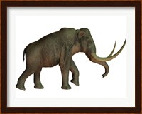 The Columbian mammoth, an extinct species of elephant Fine Art Print