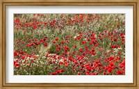 Poppy Wildflowers in Southern Morocco Fine Art Print