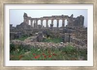 Red Poppies near Basilica in Ancient Roman City, Morocco Fine Art Print