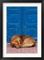 Sleeping Dog, Essaouira, Morocco Fine Art Print