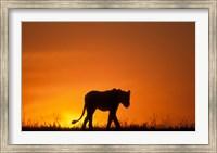 Silhouette of Lion, Masai Mara Game Reserve, Kenya Fine Art Print
