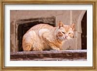 Stray Cat in Fes Medina, Morocco Fine Art Print