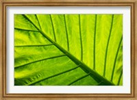 Tropical foliage in Alexandria and the Amphitheater, Egypt Fine Art Print