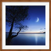 Silhouette of a lonely tree in a lake against a starry sky and moon Fine Art Print