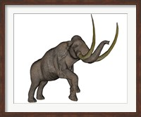 Large mammoth, white background Fine Art Print
