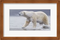 Arctic Icon Fine Art Print
