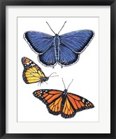 Eastern Blue & Monarch Butterfly Fine Art Print