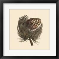Pignon Pine Fine Art Print