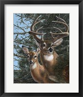 Edge of the Pines Fine Art Print