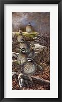 Quail Trail Fine Art Print