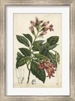 Coral Beauties III Fine Art Print
