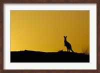 Silhouette of Kangaroo, Australia Fine Art Print