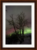 Aurora Borealis with Tree, Twin Lakes, Yukon, Canada Fine Art Print