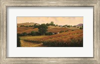 Carneros Vineyards Fine Art Print