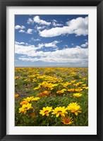 Wildflowers, Marine Parade, Napier Waterfront, Hawkes Bay, North Island, New Zealand Fine Art Print