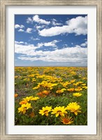 Wildflowers, Marine Parade, Napier Waterfront, Hawkes Bay, North Island, New Zealand Fine Art Print