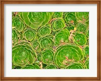 Succulent, South Island, New Zealand Fine Art Print