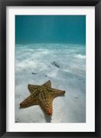 Bahamas, Marine Life, Sea star, Golden Rock Beach Fine Art Print