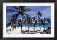 Palm Trees on St Philip, Barbados, Caribbean Fine Art Print