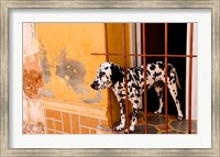 Spotted dog and colorful wall in Trinidad Cuba Fine Art Print