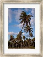 Palm Trees, Bavaro, Higuey, Punta Cana, Dominican Republic Fine Art Print
